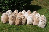 Alpaca stuffed animal light fawn_