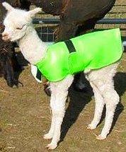 Alpaca jacket light weight