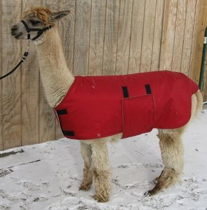 Alpaca jacket Adult medium weight