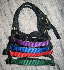 alpaca halter with colored nose band (set of 4)